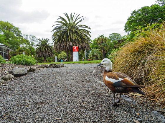 Christchurch Botanik Bahceleri