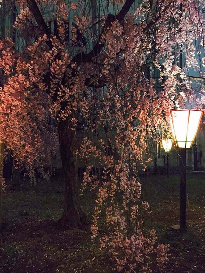 Mint Sakura Parki - Osaka