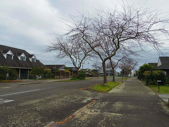 palmerston-north-sokaklari-evleri