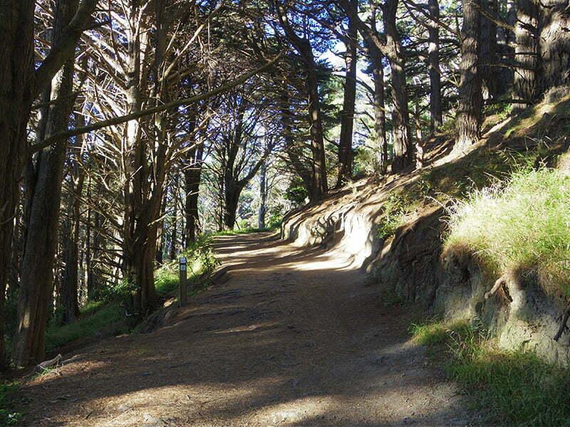 hobbitlerin-yuvarlanarak-dustukleri-yol-wellington