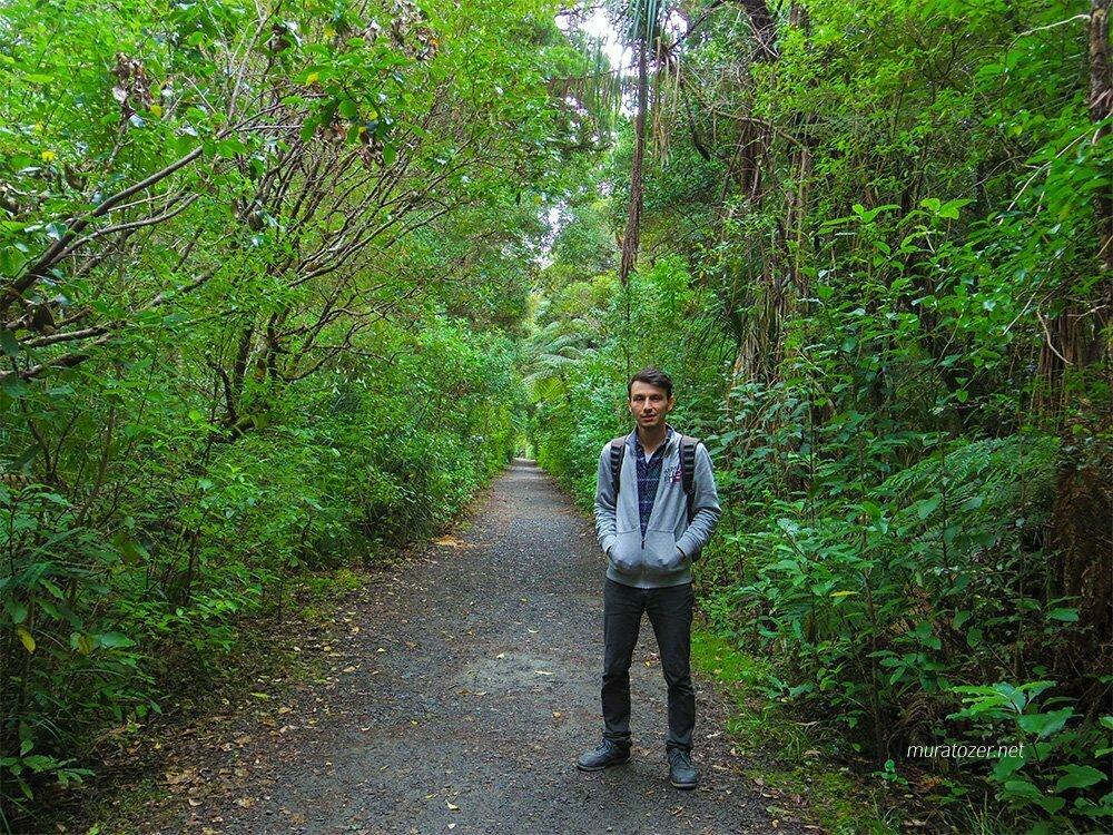 Waipoua Ormanı'na yürürken