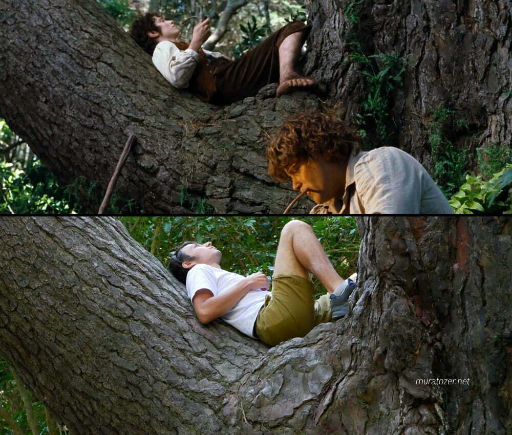 Yüzüklerin Efendisinde Sam ve Frodonun mola verdikleri ağaç.