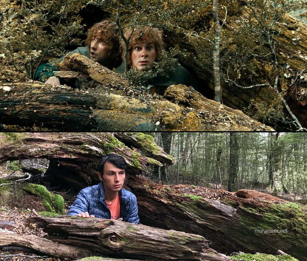 Amon Hende Merry ile Pippinin saklandıkları ağaç kovuğu.