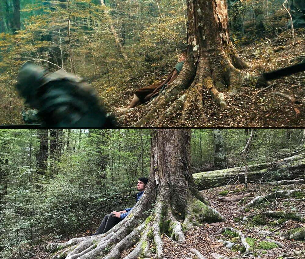 Amon Hen'de orkların saldırısı sırasında Frodonun saklandığı ağaç.