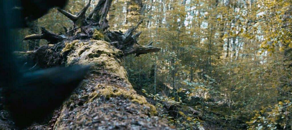 Uruk hai ve ork ordusunun üzerine bastıkları ağaç.